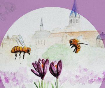 Das Hüffertgymnasium pflanzt 100.000 Krokusse für 1 Million Bienen